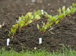 Глинистые почвы что сажать как 48