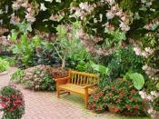 фуксия в саду