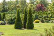 Выращивание дыни в открытом грунте: сорта, особенности посадки, тонкости ухода