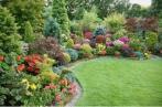 кустарники, посадка кустарников осенью