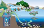 Системы фильтрации декоративных водоемов на приусадебном участке. Фильтрация для пруда