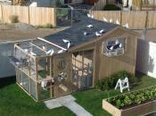 Как построить голубятню на даче своими руками