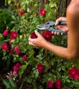 обрезка декоративно цветущих кустарников и деревьев