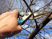 обрезка садовых деревьев весной