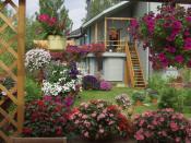 Уютный сад: петунии