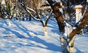 podgotovka_derevjev_k_zime000.jpg