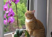 орхидеи, уход и размножение