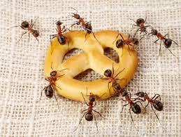 Домашние муравьи, как избавиться от муравьев в квартире