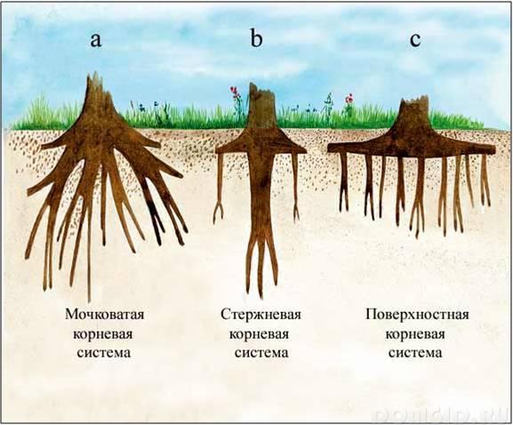 корневая система у деревьев зимой