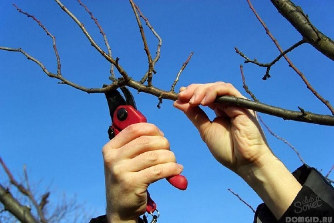 Советы по весенней обрезке плодовых деревьев и кустарников