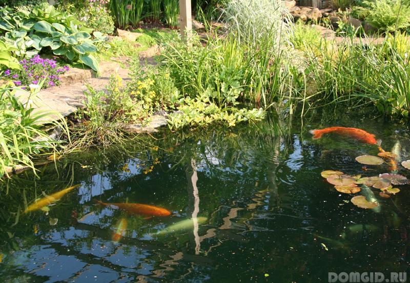 пруда для разведения рыбы
