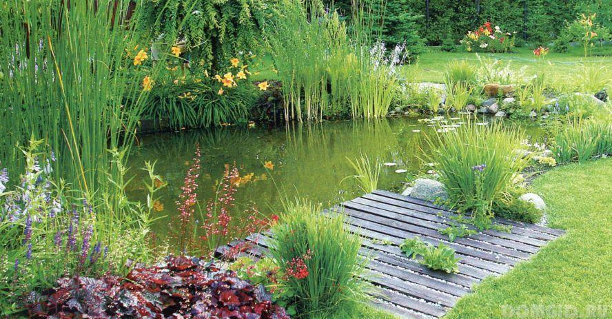 Естественный водоем на даче