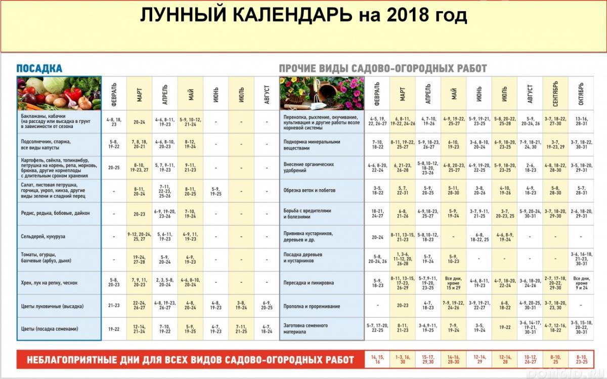 Какую рассаду сажают в феврале: что можно посадить на рассаду в феврале 2019 года