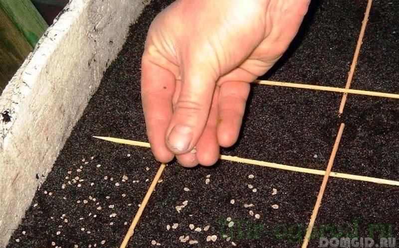 Какую рассаду сажают в середине весны, что можно посадить в апреле 2019 для супер результата