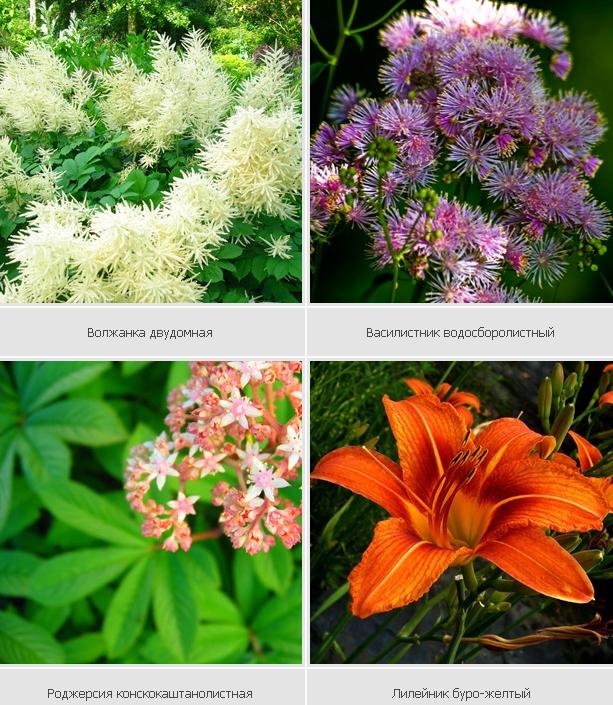 Растения хорошо растущие в тени