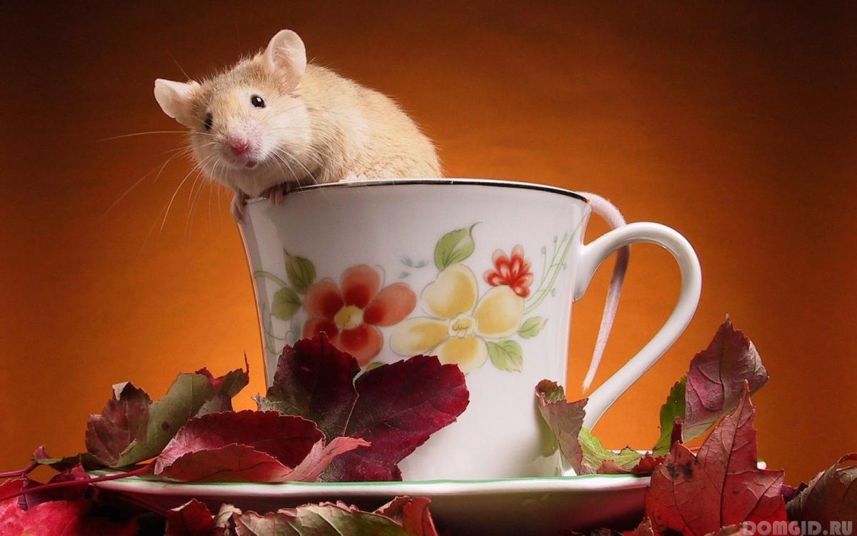живое фото просто прикоснитесь к картинке мышкой
